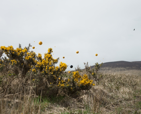 For the Love of Gorse Bush - Lin de Mol